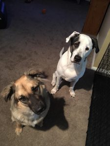 patch and obby adopted together7