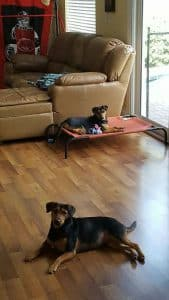 Shelby and Spencer adopted2