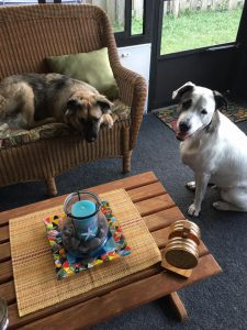 patch and obby adopted together8