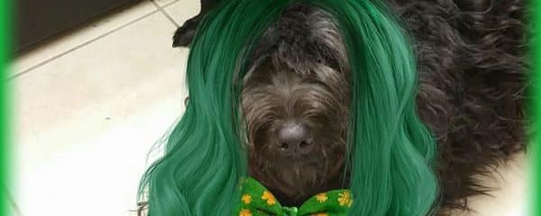 Happy Saint Patrick's Day from Beethoven and Mozart!!