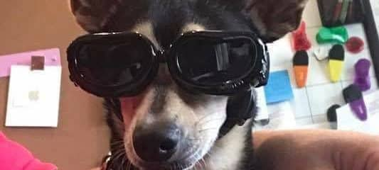 Gizmo (fka Loni) wanted to show off his new doggie goggles!