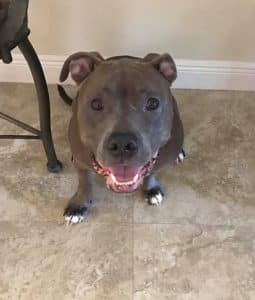 Oden Adopted3