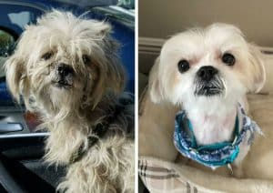 Sawyer before and after