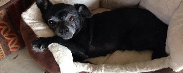 Our sweet senior girl Cupcake is just full of life and love!