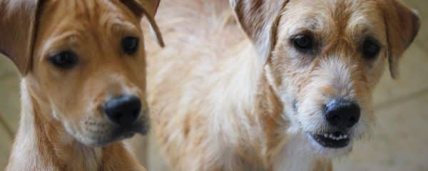 We are Trying desperately to keep Mommy Astrea & Her Son Astro Together.