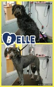 Belle Adopted2