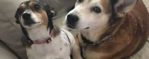 Little Kai (fka Cher) and Miss Macie (fka Loba) are always together.