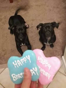 Jan and Kenickie adopted together19