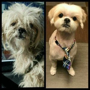 Sawyer before and after1