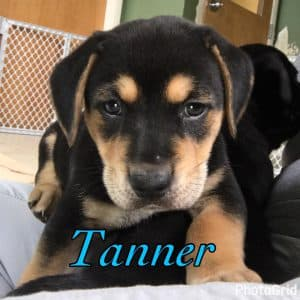 Tanya Puppy Tanner 1
