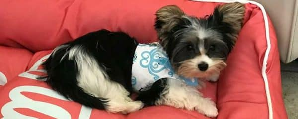 Little Mickey (fka Cutie) is doing so amazing in his new home!