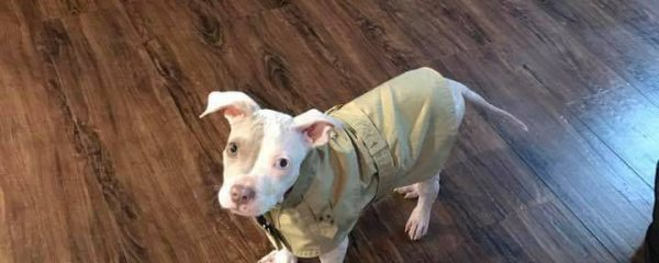 My Foster mommy Jessy said I needed to wear this thing called a raincoat today.