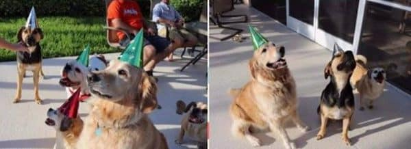Jax (fka Arnold) had the best 2nd birthday party with all of his friends this weekend!!