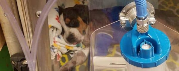 Please Donate for Murphy just three months of age attacked by another dog.
