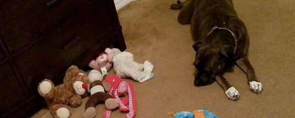 Sheila is just rounding up her toys before bed lol!