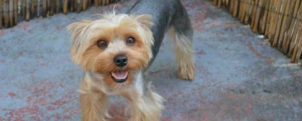 TEDDY Has Been FOUND!! HOME AND SAFE!!