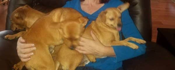 Triple update!! Karen, Ross and Paulie were adopted together.