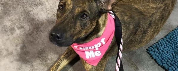 Carmen is perfection and needs a home…