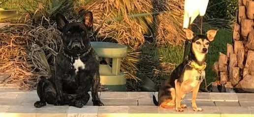Gizzy (fka Loni on the right) is enjoying the cool and breezy evening with his fur sibling.
