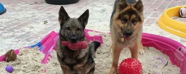 King (right) is very happy to share the sandbox with LoraLi (left).