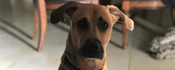 Shilo (fka Thomas) is stopping by to show how handsome is!