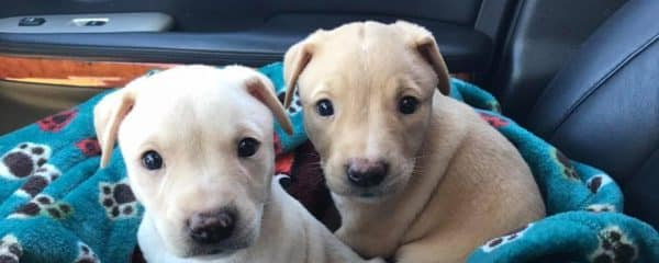 Rhett and Rufus … these pups are looking for their forever home.