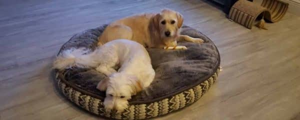 Macy (fka Romi) and Marley (fka Riley) are inseparable