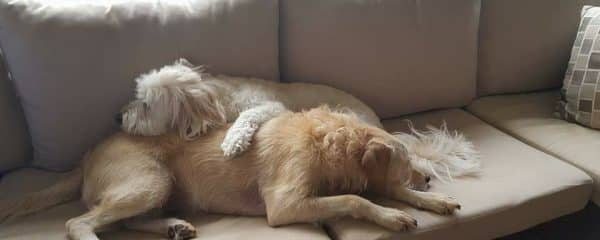 Macy (fka Romi) and Marley (fka Riley) are inseparable!