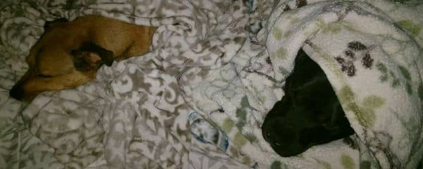 Night night from Dixie, TJ, Dobbie and their fur sibling.