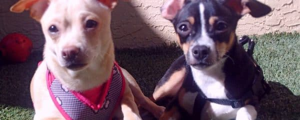 Zep & Boots Bonded Brothers lost their family