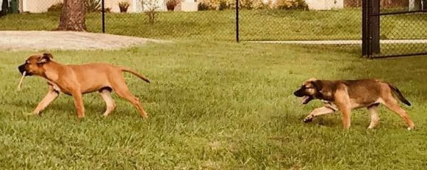 Diamond's babies Chase (fka Dreyfus) and Brody (fka Dante) are having a field day in their huge backyard.