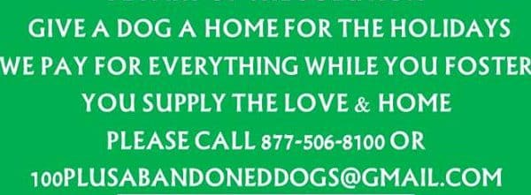Consider fostering one of our amazing dogs for the holidays.