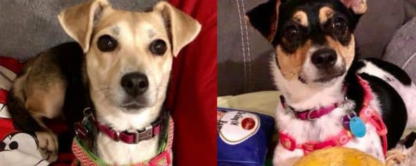 Mommy Reign & Baby Joey, formerly known as Judy and Liza need a forever home.