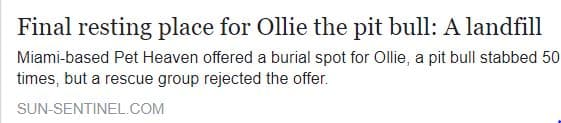 Ollie could have gotten a proper burial at a local pet cemetery.