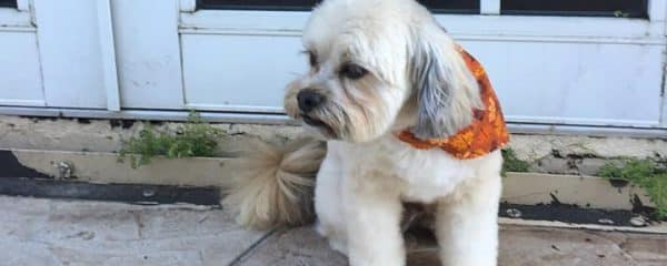Ziggy (fka Wookie) is rocking a new hair cut for the fall.