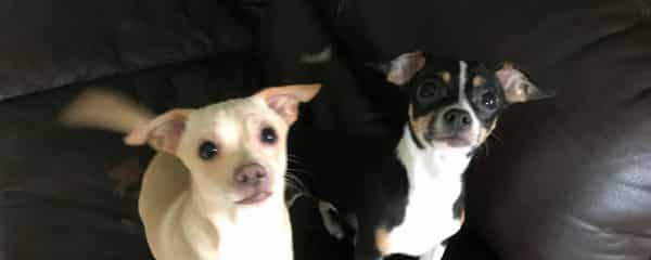 Desperately Seeking a Forever loving home Together! Bonded pair. 5 months of age.