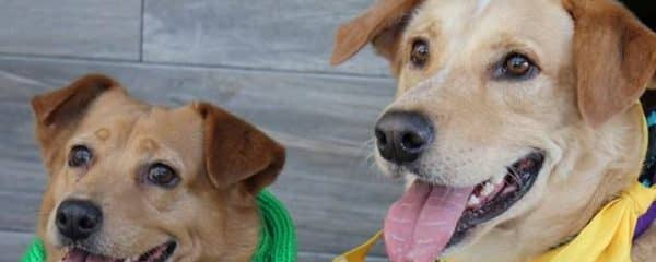Oliver and Ginger, formerly Captain and Tennille, are looking for a new forever home TOGETHER.