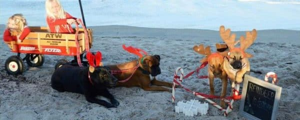 Chase (fka Dreyfus) and Brody (fka Dante) took their Christmas photos.