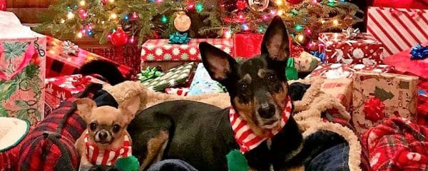 Kayla (aka Kiki) wanted to stop by with her fur sibling to wish us all Happy Holidays!!