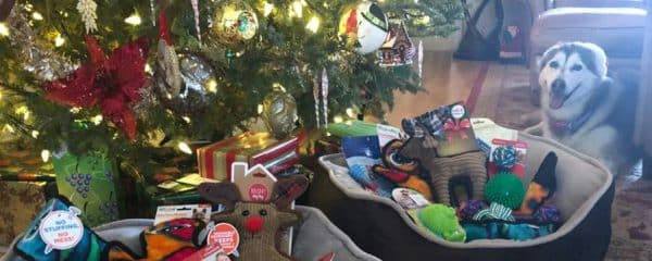 Mandy is paying it forward and wishes 100+ doggies a Merry Christmas.