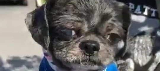 Little Andy was rescued today from the Miami-Dade Animal Services kill shelter.