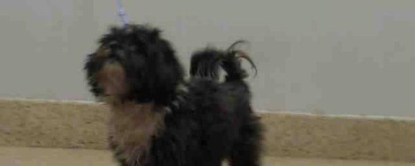 URGENT! Has ocular disease Urgent at the Miami-Dade Animal Services kill shelter.