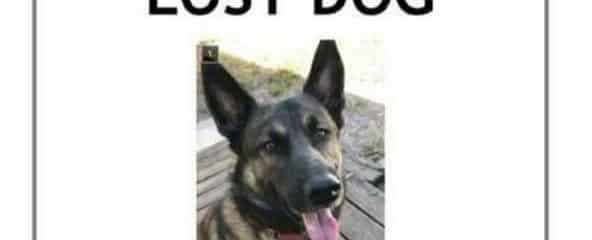 This is a Courtesy Post to Help find Junior