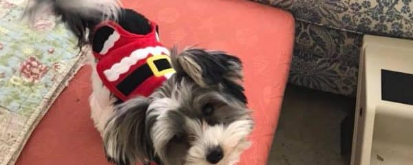 Look at this little Santa.