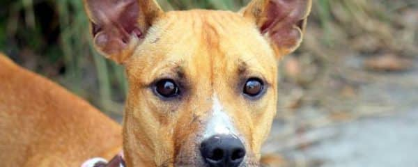 Merci confiscation case needs a Forever loving home