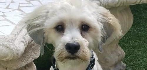 RUDY HAS GONE TO FOSTER TO ADOPT!