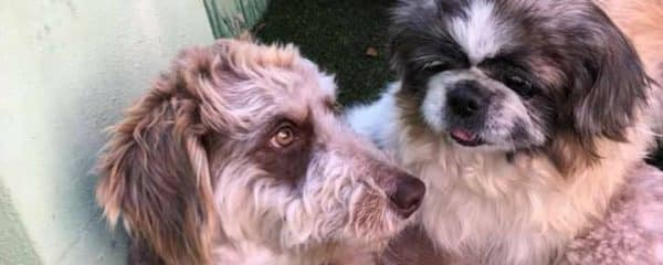 Bandit and Betty Boop looking for their forever home