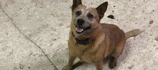 UPDATE FOXY IS HOME SAFE!