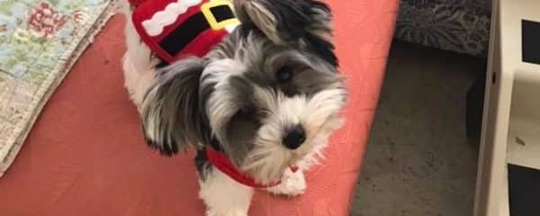 Mickey (fka Cutie) had the best first Christmas in a loving home!!