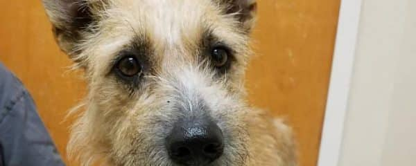 Salene is a sweet terrier looking for a forever home.